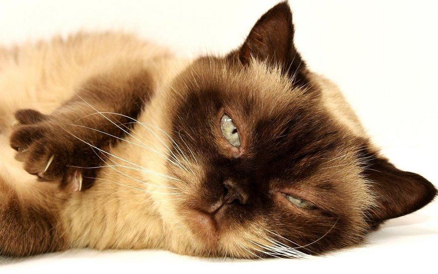 Katzenmusik entspannt Mietzis